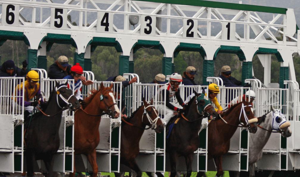 horse-race-start