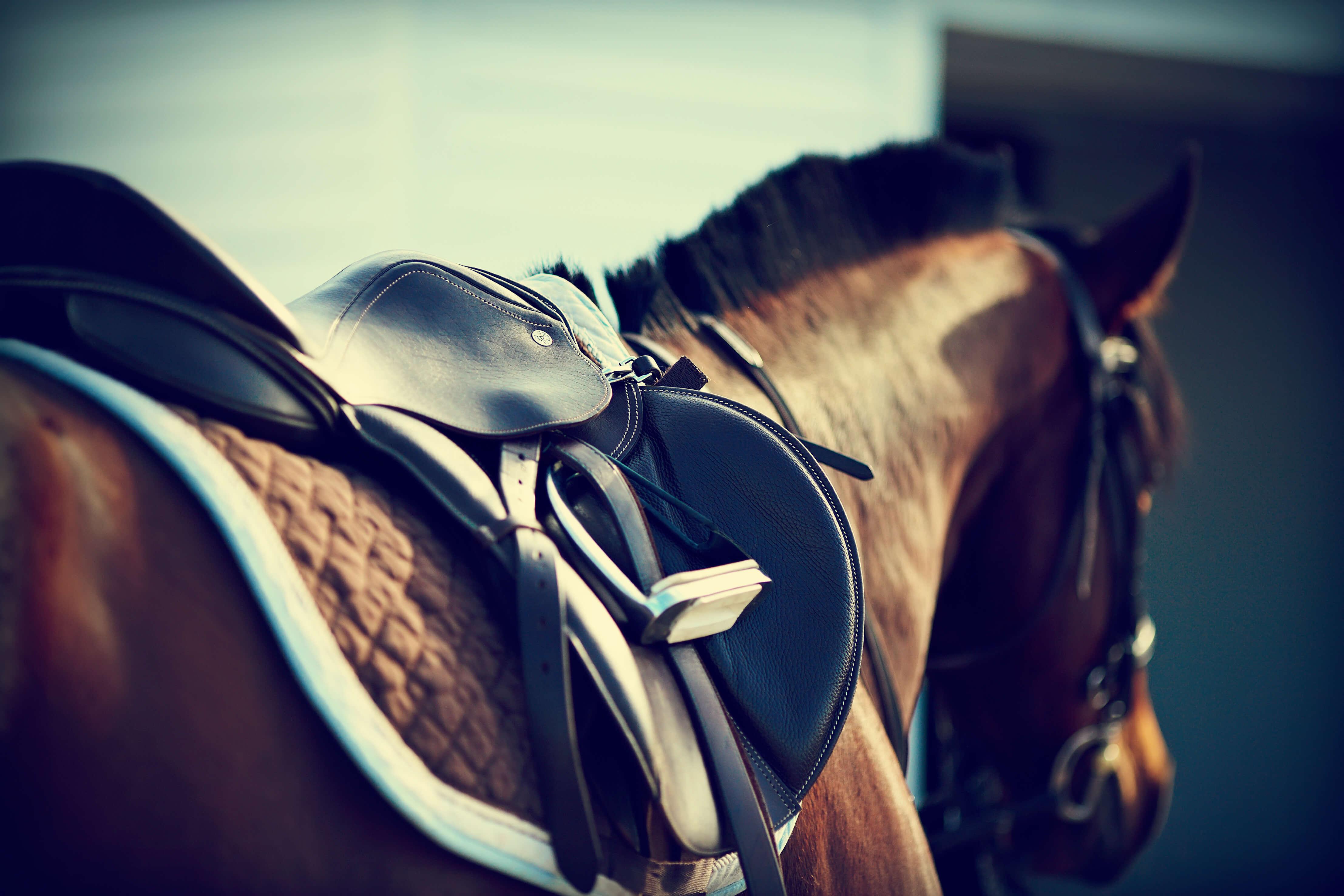 Grand national best horse
